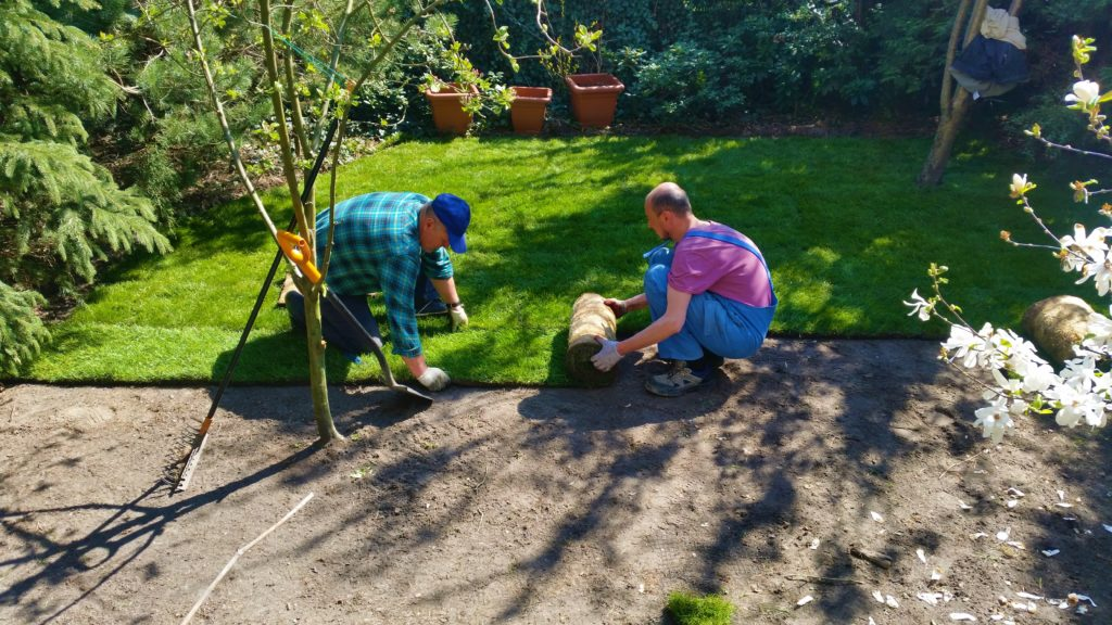 Zakładanie trawnika z rolki
