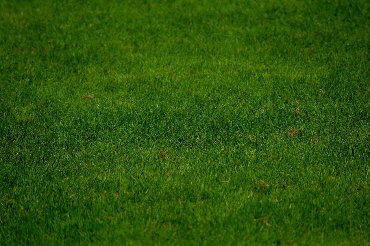 jak dbać o trawnik