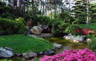 gatunki trawy dla ogrodu