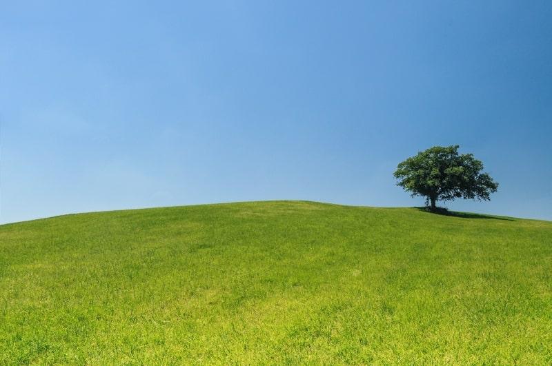 pogoda na założenie trawnika