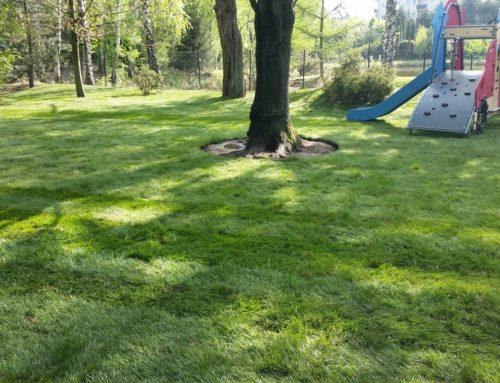 Trawnik z Rolki Przedszkole Mysiadło