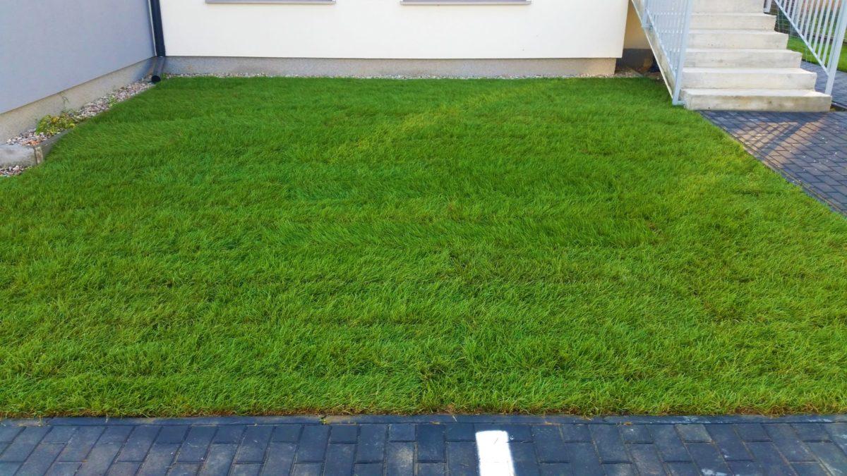 Zakładanie trawnika z rolki Józefosław