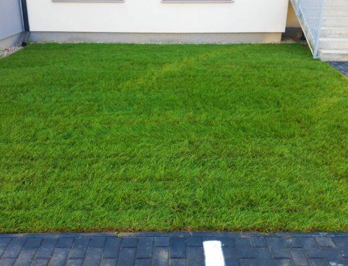 Józefosław – Zakładanie trawnika z rolki