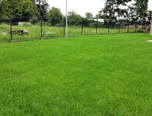 Założenie trawnika z rolki + ogrodzenie panele 3D